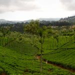 6 Top Things To See In Coonoor
