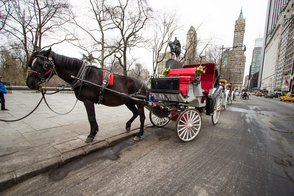 new-york-central-park-carriage-ride