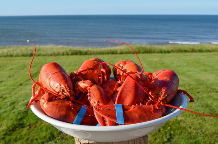 Bowl of fresh cooked lobsters with ocean background and blue sky