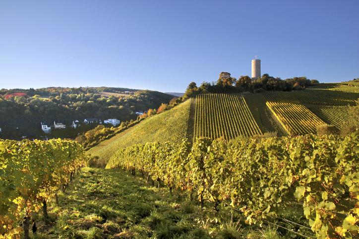 Castle Scharfstein (1160 to 1260) in Kiedrich, Rheingau, Hesse, Germany