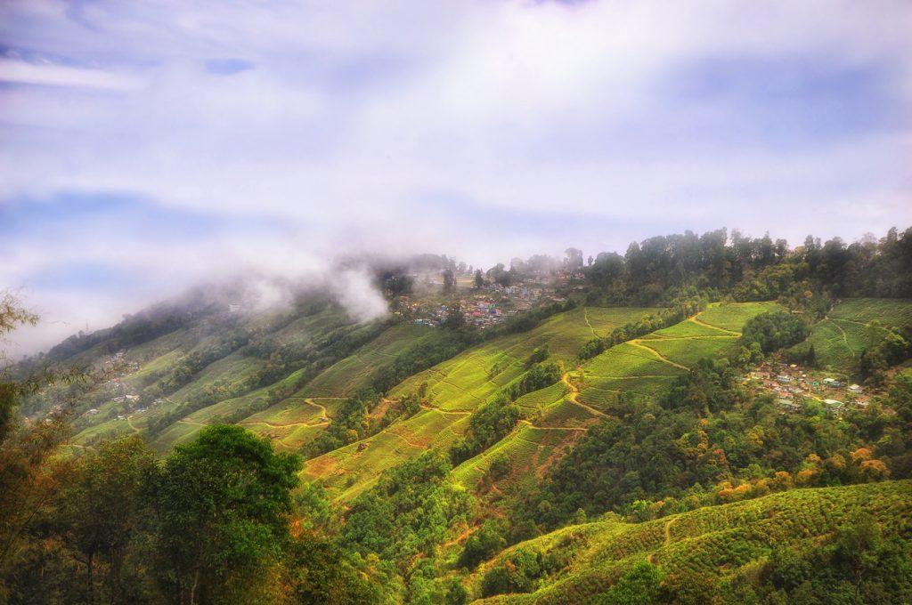 Tea plantation landscape on mountain in Darjeeling, Long Weekends, teas from india