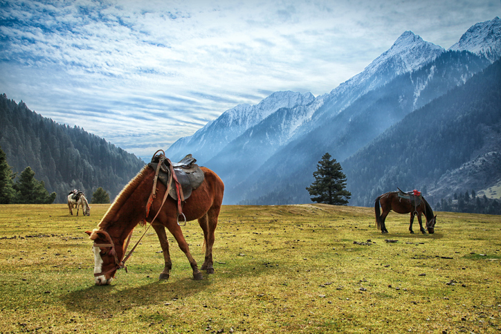 Horses grazing at Aru Valley near Pahalgam, Jammu and Kashmir, India