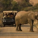 Here Is An African Safari Packing List For Your Upcoming Trip