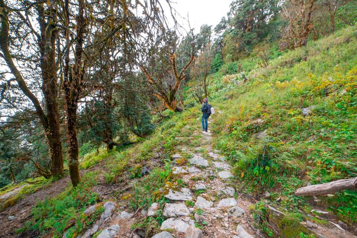 Forest Trek in Himalayas Khaliya Top - Munsiyari, Uttarakhand, India