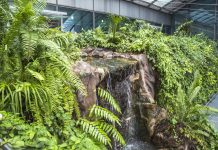 Inside the butterfly Garden of Singapore Changi Airport