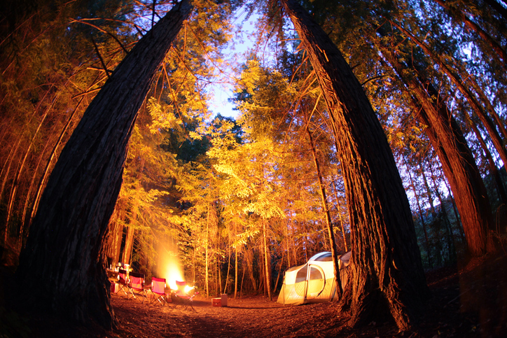 Tents and a campfire while camping under giant trees and the night sky in Redwoods National Park.