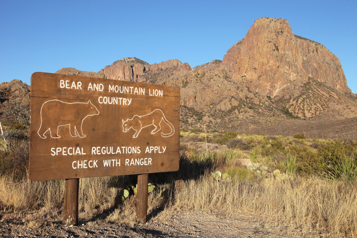 Bear and mountain lion warning sign in Big Bend National Park