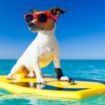 Ten Of The Best Dog Friendly Beaches Around The World