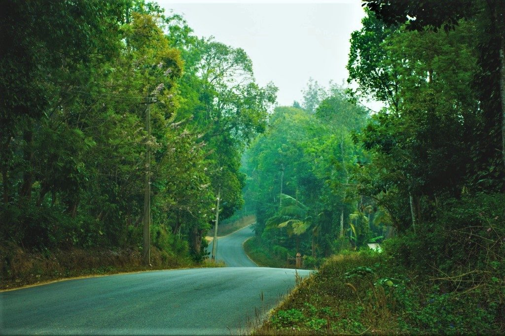 Coorg Forest Road