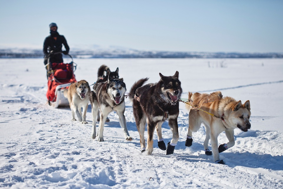 dog sled alaska