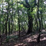 Visit Meghalaya's Sacred Grove in Mawphlang
