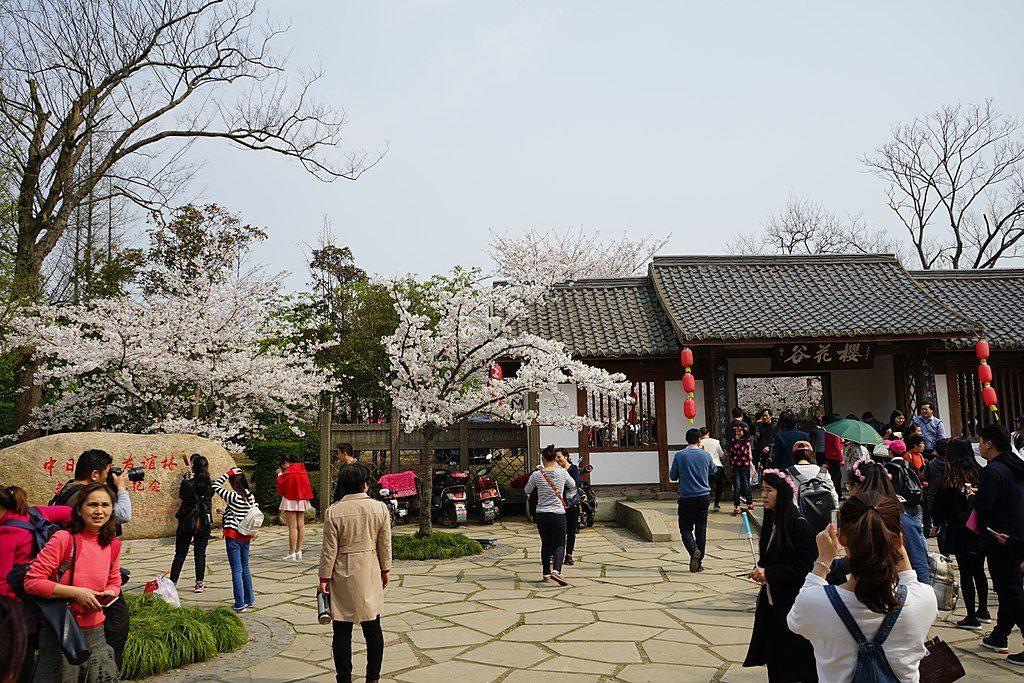 Cherry Blossom Valley, Yuantouzhu Island