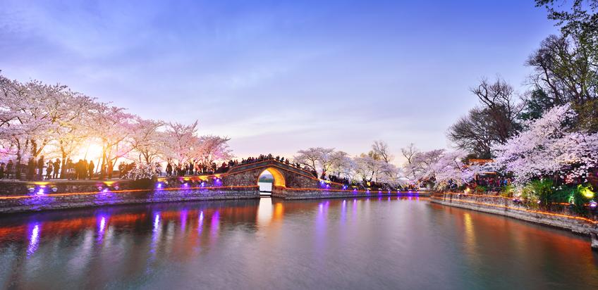 Cherry blossoms lush season in the lakefront at sunset, Jiangsu Province, Yuantouzhu Island