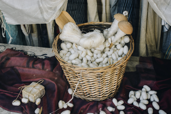 Lots of white silkworm cocoons in straw basket in the view