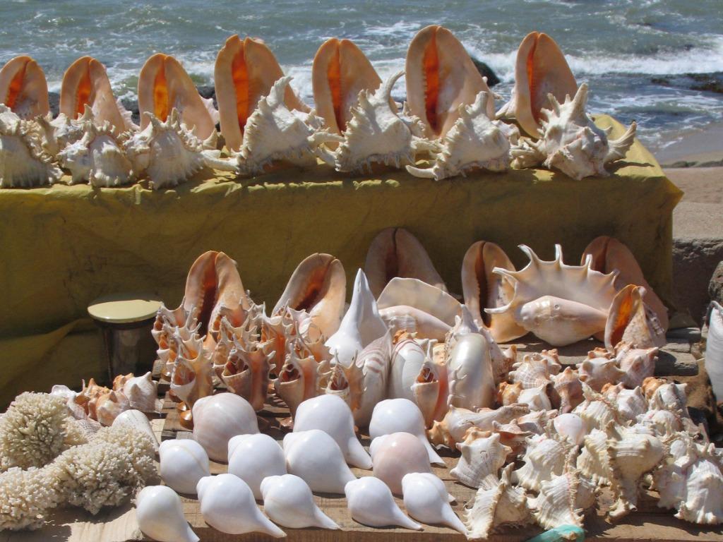 Decorations sea shells Kanyakumari Tamil Nadu India