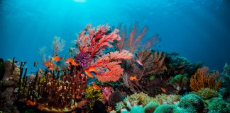 Colourful coral scene underwater great barrier reef
