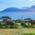 The 10 Best Things to Do in Tanzania on Your Next Vacation