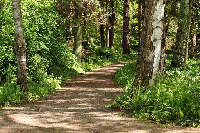 uk study nature boosts health