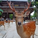 Plastic Bags Left Behind By Tourists Kill 9 Sacred Japanese Deer