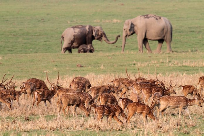 Jim Corbett, Wildlife Safaris