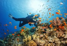 scuba diving Andamans or Pondicherry