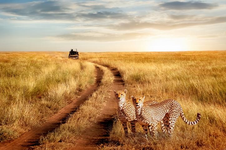 Majete Wildlife ReserveinMalawi