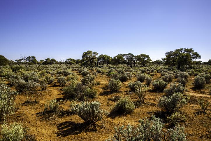 Victoria desert landscape, Australia