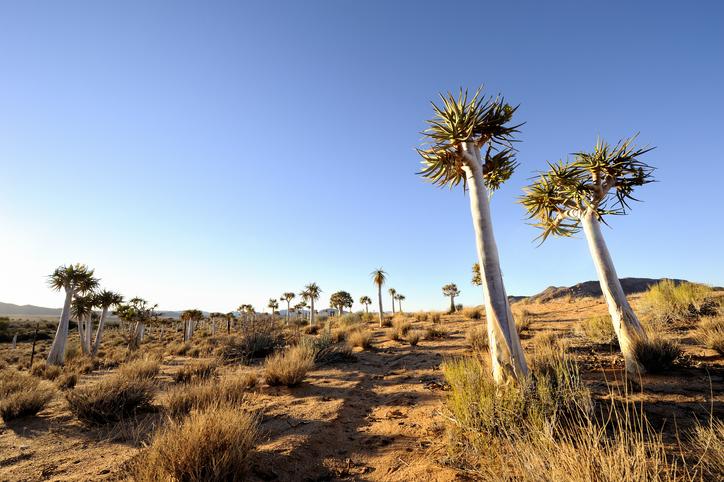 Kalahari desert.