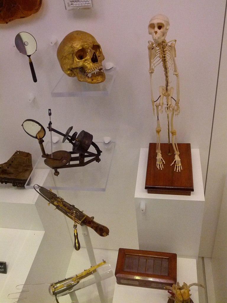 National Museum of Health & Medicine Display Case