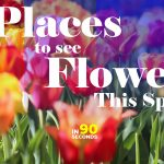 In 90 Seconds - Places To See Flowers In Spring