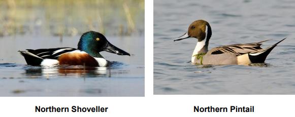The variety of birds found at the Yelahanka Puttenahalli lake