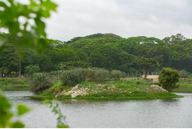 Kowdenahalli lake after rejuvenation
