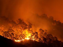 amazon wildfires