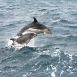New Zealand Has Banned Tourists From Swimming With Dolphins In The Bay Of Islands