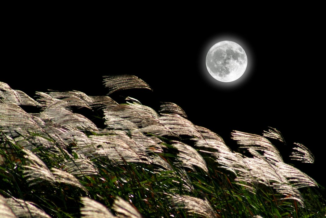 japan moon festival