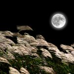 Tsukimi: Japan's Moon-Viewing Festival Takes Place This Month