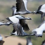 World Migratory Day: Best Places to See Migratory Birds in India!