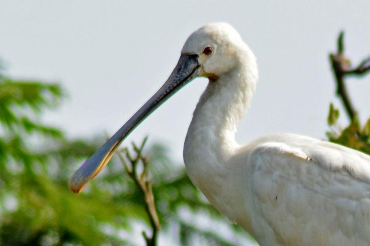Ranganathitthu Bird Sanctuary