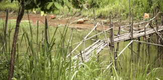 Bamboo trek to Mawryngkhang