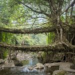 Visiting The Double Decker Living Root Bridges of Nongriat