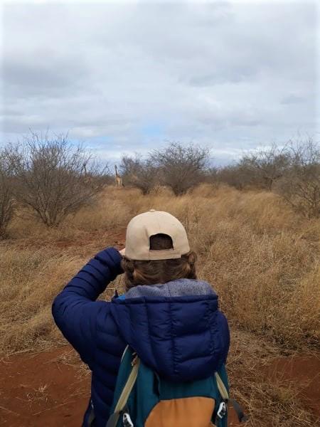 walking safari giraffe