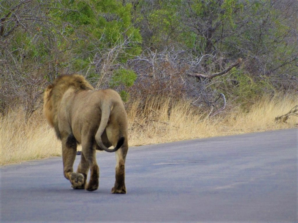 self-guided safari