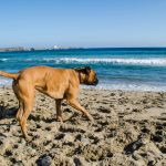 Why I Found Working With Abandoned Dogs In Spain SO Amazing