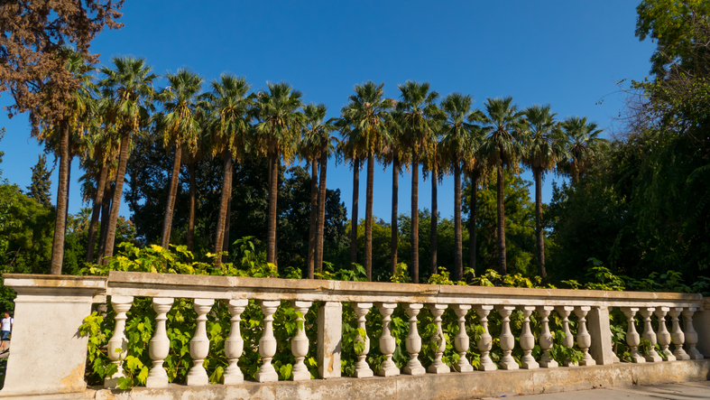 Palm tree in a row at National garden Athens, Greece