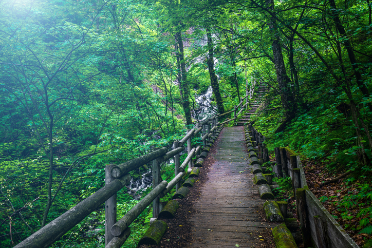 A wooden pathway through a forested area, ecotherapy