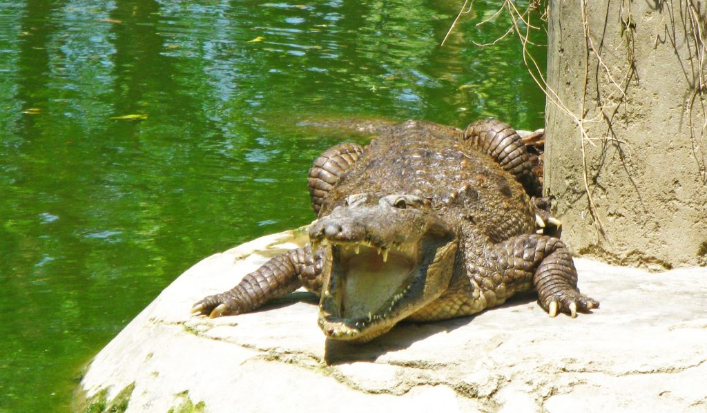Crocodile sanctuary in India