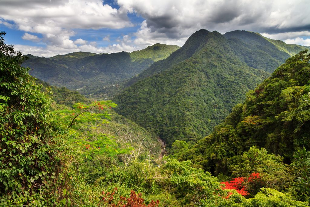 The lush green and diverse landscape of Puerto Rico