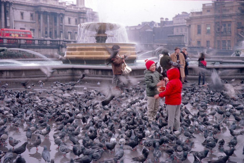 Tourists and Londoners feeding on pigeons in Trafalgar Square on a rainy day