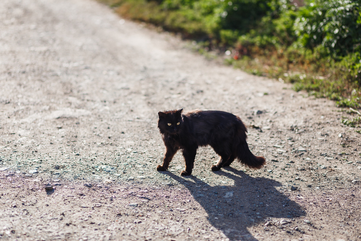 Black cat crossing the road, superstitions in india