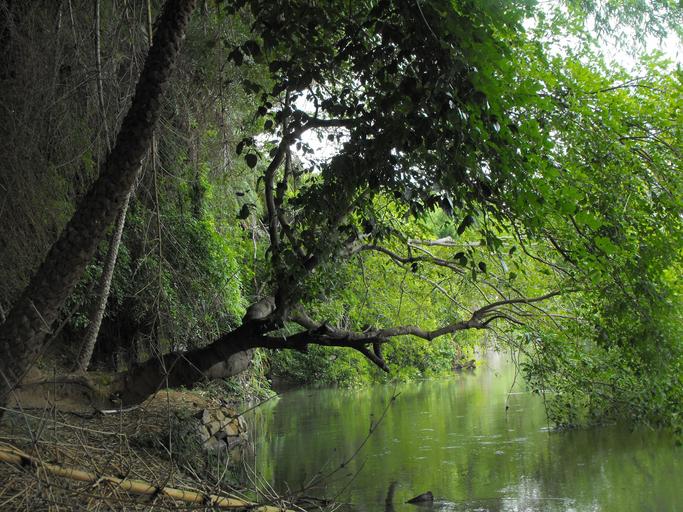 Dense foliage at Ranganathittu bird sanctuary, Mandya district, Karnataka